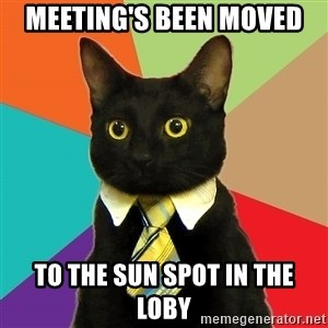 Business Cat - Meeting's been moved to the sun spot in the loby