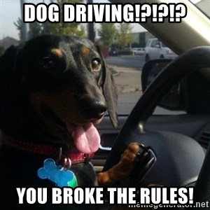 puppycop - dog Driving!?!?!? you broke the rules!