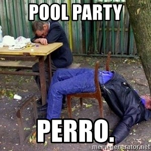 drunk - pool party perro.