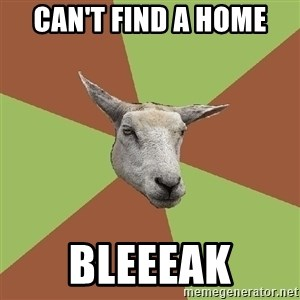 The Gamer Sheep - can't find a home bleeeak