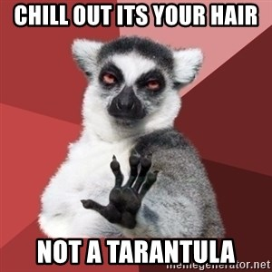 Chill Out Lemur - chill out its your hair not a tarantula