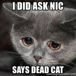 Sadcat - I DID ASK NIC SAYS DEAD CAT