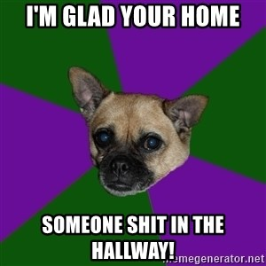 WTF dog - I'm glad your home  someone shit in the hallway!