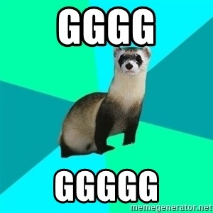 Obvious Question Ferret - gggg ggggg