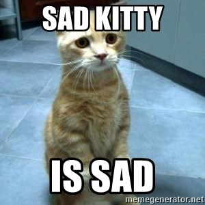 Sad Kitty - sad kitty is sad