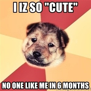 """Typical Puppy - i iz so """"cute"""" no one like me in 6 months"""