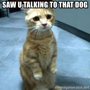 Sad Kitty - saw u talking to that dog
