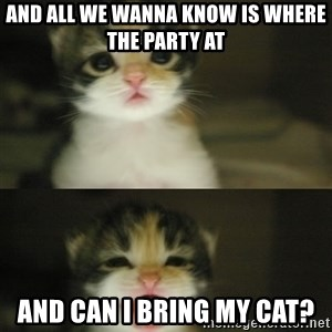 Adorable Kitten - AND ALL WE WANNA KNOW IS WHERE THE PARTY AT AND CAN I BRING MY CAT?