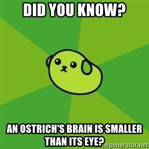 Mameshiba - Did you know? An ostrich's brain is smaller than its eye?