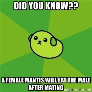 Mameshiba - Did you know?? A female mantis will eat the male after mating