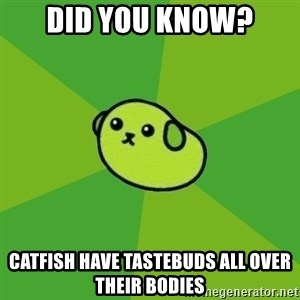 Mameshiba - Did you know? Catfish have tastebuds all over their bodies