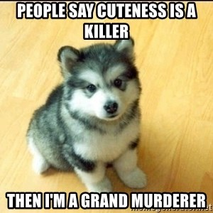 Baby Courage Wolf - People say cuteness is a killer Then I'm A grand Murderer