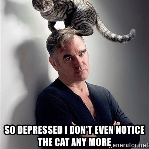 morrissey - SO DEPRESSED I DON'T EVEN NOTICE THE CAT ANY MORE