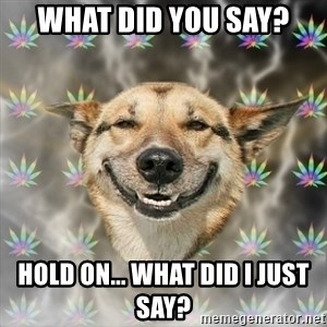 Stoner Dog - what did you say? hold on... what did i just say?