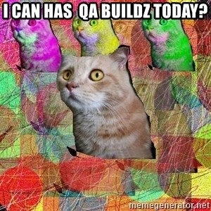 A Cat - I can has  qa buildz today?