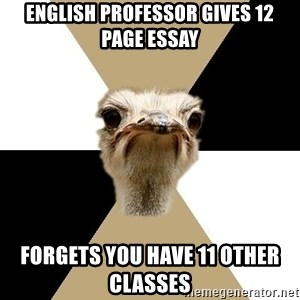 Music Major Ostrich - English professor gives 12 page essay Forgets you have 11 other classes