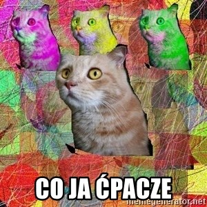 A Cat - CO JA ĆPACZE