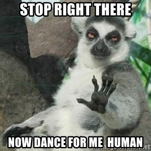 Not Today Lemur - stop right there now dance for me  human