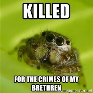 Spiderbro - killed for the crimes of my brethren