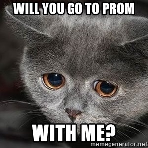 Sadcat - will you go to prom with me?