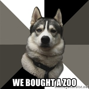 Wise Husky - we bought a zoo