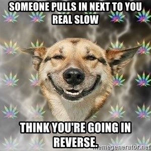 Stoner Dog - someone pulls in next to you real slow think you're going in reverse.