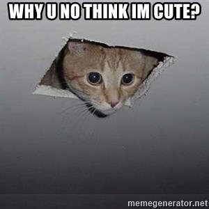 Ceiling cat - why u no think im cute?