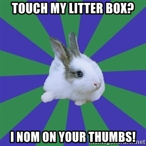 Restaurant Rabbit - tOUCH MY LITTER BOX? I NOM ON YOUR THUMBS!