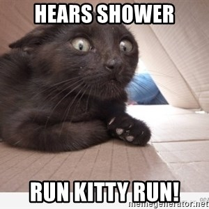 Paranoid cat - hears shower run kitty run!