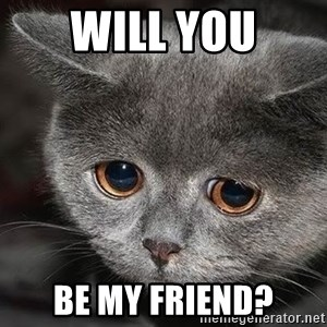 Sadcat - will you be my friend?
