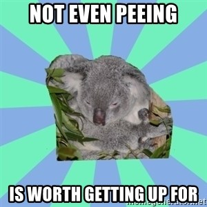 Clinically Depressed Koala - not even peeing is worth getting up for