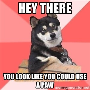 Cool Dog - Hey There You Look like you could use a paw