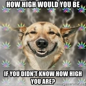 Stoner Dog - HOW HIGH WOULD YOU BE IF YOU DIDN'T KNOW HOW HIGH YOU ARE?