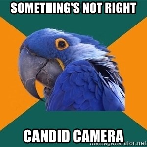 Paranoid Parrot - something's not right candid camera