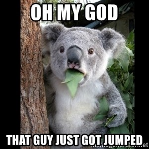 Koala can't believe it - Oh my god that guy just got jumped
