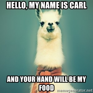 Pancakes llama - hello, my name is carl and your hand will be my food