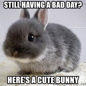 ADHD Bunny - Still having a bad day? here's a cute bunny