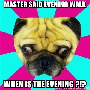 Perplexed Pug - Master said evening walk When is the evening ?!?