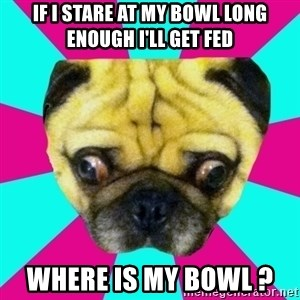 Perplexed Pug - If I stare at my bowl long enough I'll get feD Where is my bOwl ?