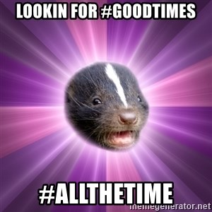 Party Skunk - lookin for #goodtimes #allthetime