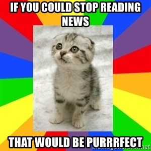 Cute Kitten - If you could stop reading news that would be purrrfect