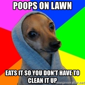 Good Guy Greg's dog - Poops on lawn eats it so you don't have to clean it up