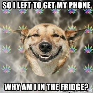 Stoner Dog - so i left to get my phone why am i in the fridge?