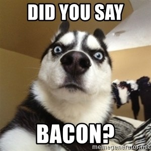 Surprised Husky - did you say bacon?
