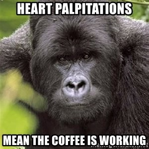 Grad Student Gorilla - heart palpitations mean the coffee is working