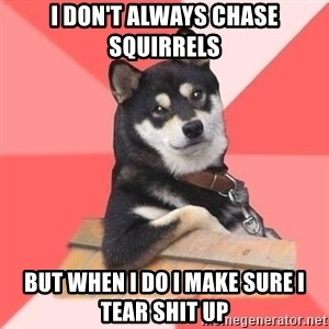Cool Dog - i don't always chase squirrels  but when i do i make sure i tear shit up