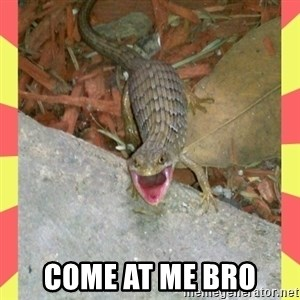 lizard - Come at me bro