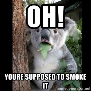 Koala can't believe it - Oh! youre supposed to smoke it