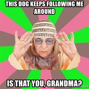 New Age Aunt - this dog keeps following me around is that you, grandma?