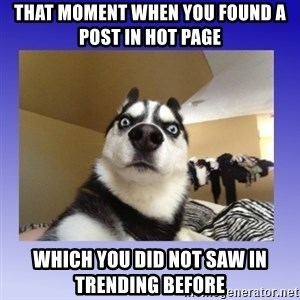 Dog Surprise - that moment when you found a post in hot page which you did not saw in trending before